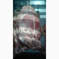 Мясо говядина HALAL в Туркменистане