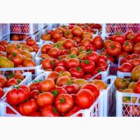 Помидоры (томаты) из Туркменистана