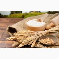 Продам Муку, Ячмень, Пшеницу, Кукурузу