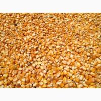 Corn to Ashgabad Turkmenistan