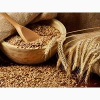 Семена озимой пшеницы, ячменя Краснодарский край