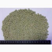 Green lentils in bags