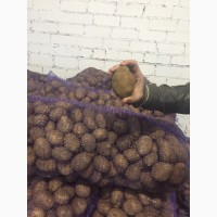 Картофель из беларуссии