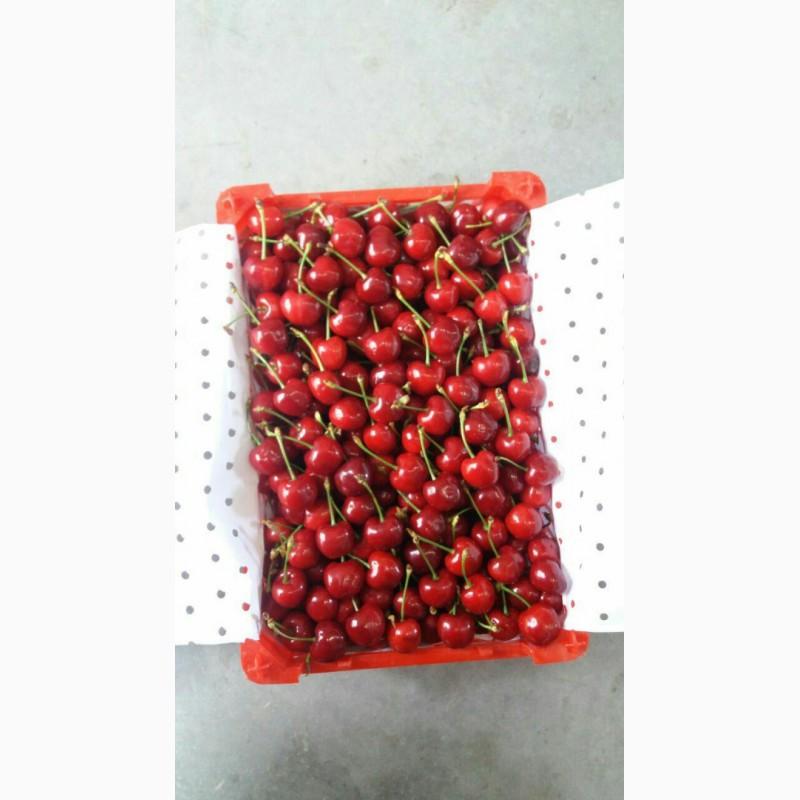 Фото 2. Продам клубнику, абрикосы и черешню из Узбекистана Урожай 2018