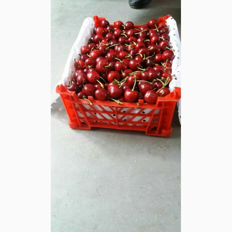 Фото 3. Продам клубнику, абрикосы и черешню из Узбекистана Урожай 2018