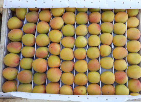 Фото 4. Продам клубнику, абрикосы и черешню из Узбекистана Урожай 2018