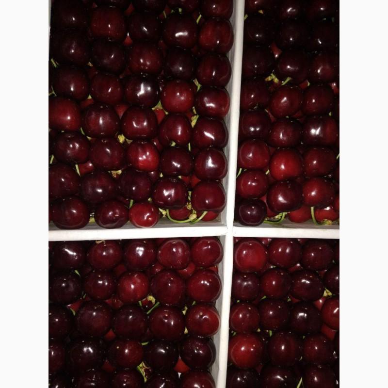 Фото 5. Продам клубнику, абрикосы и черешню из Узбекистана Урожай 2018