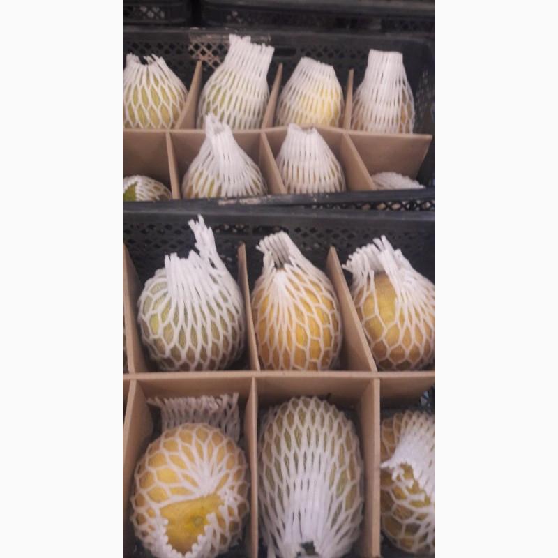 Фото 8. Продам клубнику, абрикосы и черешню из Узбекистана Урожай 2018