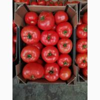 Закупаю томаты