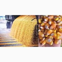 Кукуруза с поставкой в Ашхабад